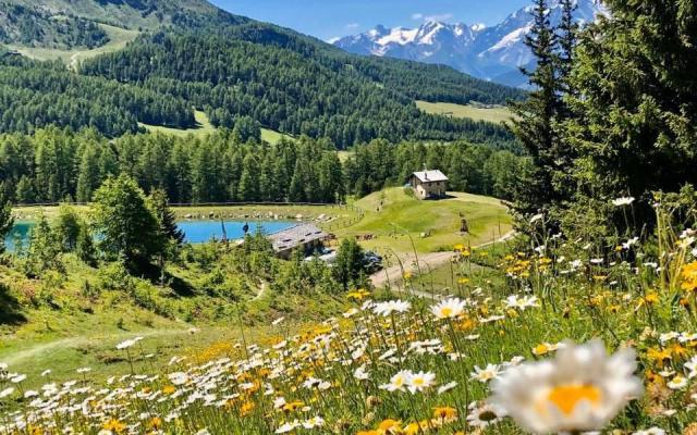 Maisons des Rêves Alpins