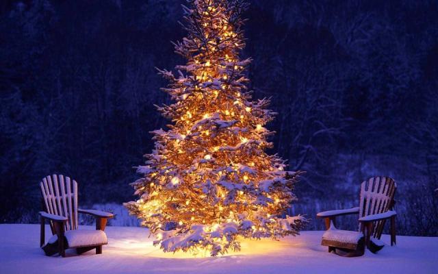 Fête de l'arbre de Noël